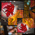 Janis Knight - Fall Leaf Collage