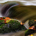 Greg Mimbs - Fall Leaves On Mossy...