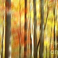 Benanne Stiens - Fall Trees Abstract