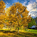 Debra and Dave Vanderlaan - Fall Trees at the Farm