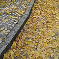 Crow River North Photography - Fallen Leaves on an...