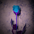 Minding My  Visions - Fantasy Teal Purple Rose