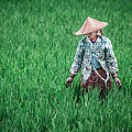 Shiv Ramky - Farmer working in Bali...