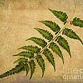 Michelle Tinger - Fern Horizontal No. 2