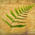 Michelle Tinger - Fern Horizontal No.1