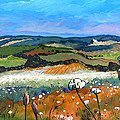 Stefan Boettcher - Fields with Yarrow