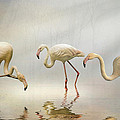 Brian Tarr - Flamingos in the mist