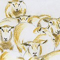 Annemeet Van der Leij - Flock of sheep
