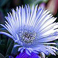 Chris Berry - Flower In Macro