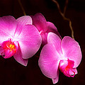 Mike Savad - Flower - Orchid - Better...
