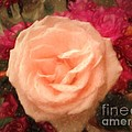 Luther  Fine Art - Flower - Softly Rose Joy...