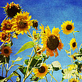 Luther   Fine Art - Flower -Sunflower...