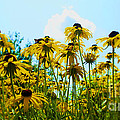 Luther   Fine Art - Flower - Sunflower...