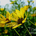 Luther  Fine Art - Flower - Sunning...