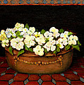 Vivian ANDERSON - Flower Tub Rose Bay