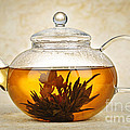 Elena Elisseeva - Flowering blooming tea