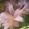 Luther  Fine Art - Flowers - Dreamy Lilies...