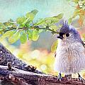 Debbie Portwood - Fluffy Tufted Titmouse