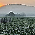Frozen in Time Fine Art Photography - Foggy Farm Field