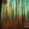 Wendy Stevenson - Forest Impressions