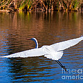 Jerry Cowart - Free As An Egret Bird...