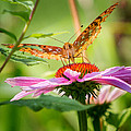 Bill  Wakeley - Fritillary Butterfly