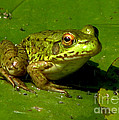 Inspired Nature Photography By Shelley Myke - Frog on a Lily Pad