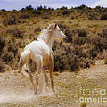 Jerry Cowart - Galloping White Stallion...