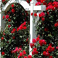 Girdie Mullins - Gate of Roses2