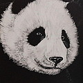 Bob Williams - Giant Panda