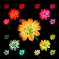 Chandana Arts - Glowing Daisies
