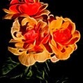 Linda Phelps - Glowing  Red-Orange Roses