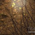 Janice Rae Pariza - Golden Autumn Abstract...