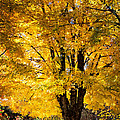 Debra and Dave Vanderlaan - Golden Maples