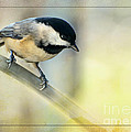 Debbie Portwood - Golden Morning Chickadee