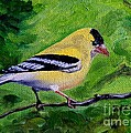 Julie Brugh Riffey - Goldfinch