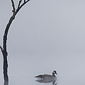 Bill  Wakeley - Goose Of The Fog