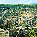 Bob and Nadine Johnston - Grand Canyon from Hermit...