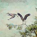 Peggy Collins - Great Blue Herons in...