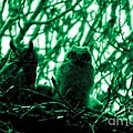 Jeff  Swan - Great Horned Owl And...