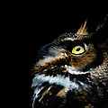 Tracy Munson - Great Horned Owl