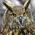 John Straton - Great horned owl v3