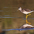 Ruth Jolly - Greater yellow legs