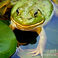 Neal  Eslinger - Green Frog at Trustom...