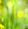 Elena Elisseeva - Green grass with yellow...