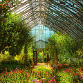 Mike Savad - Greenhouse - Paradise...