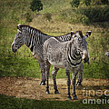 Terri  Waters - Grevy