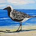 Donald Schrier - Grey Plover on Gulf...