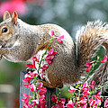 Terri  Waters - Grey Squirrel in the...