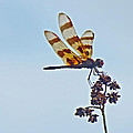 Mother Nature - Halloween Pennant...